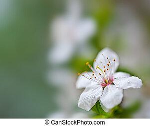 mjuk, blommig, bakgrund.