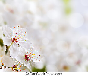 mjuk, blommig, bakgrund