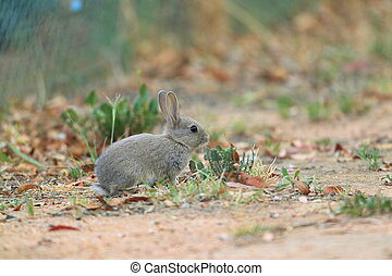 mládě, maličký, králík, do, ta, louka