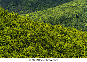 mladický les, (abstract, background)