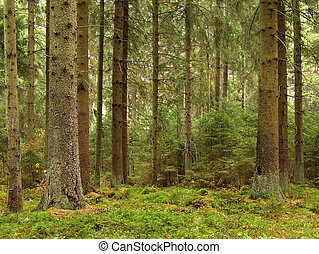 mladický les