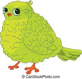 mladický ptáci