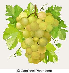 mladický zrnko vína