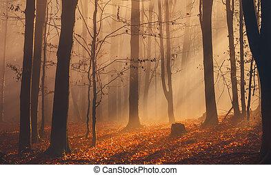 mlha, barvitý, podzim zapomenout, les, sluneční paprsky