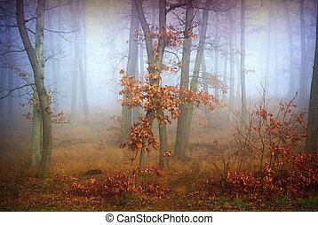 mlha, les