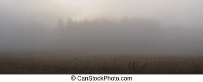 mlha, popředí, silueta, -, louka, grafické pozadí, mlha, les