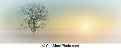 mlhavý, východ slunce