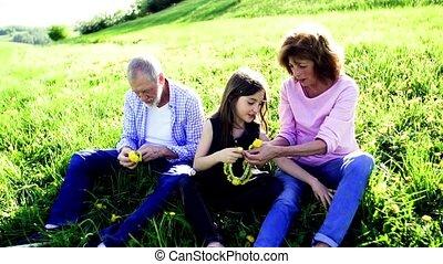 mniszek lekarski, natura, wiosna, para, wnuczka, wreath.,...