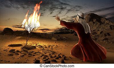 moïse, buisson, brûlé
