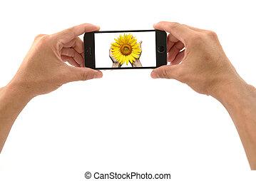 mobil, gripande, ringa, solros, hand
