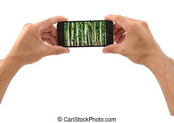 mobil, gripande, sugarcane, ringa, hand