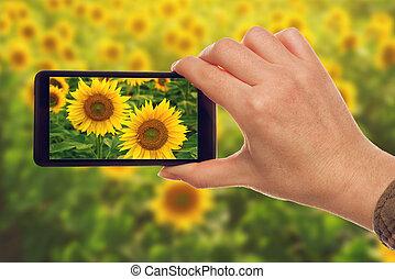 mobile, instantanés, téléphone, tournesols, confection, intelligent