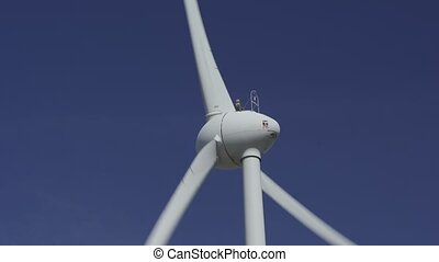 moc, wiatrak, tłumaczenie, roślina, closeup, krajowiec