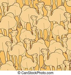modèle, chameau, troupeau
