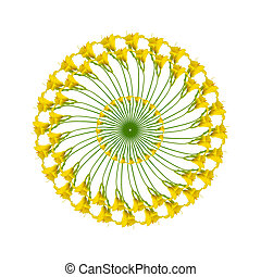 modèle, circulaire, anneaux, jaune, daylilies