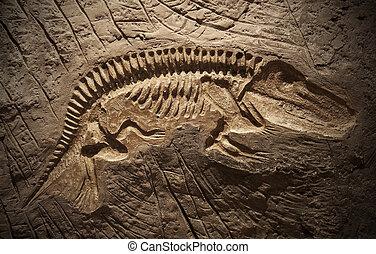 modèle, dinosaure, fossile