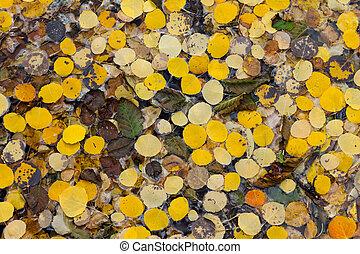 modèle, feuilles, tremble, fond, automne