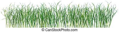 modèle, herbe, isolé, texture