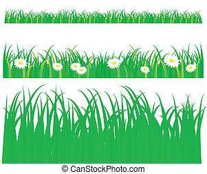 modèle, herbe, vert, pâquerette
