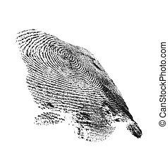 modèle, isolé, arrière-plan noir, empreinte doigt, blanc