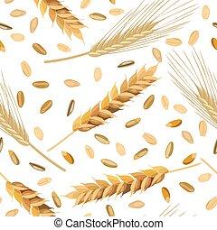 modèle, seigle, blé, grains, oreilles