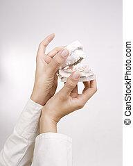 modèles, gypse, coulage, dentaire, -, concept, tenant mains