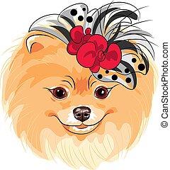moda, pomeranian, razza, cane, vettore, sorridente