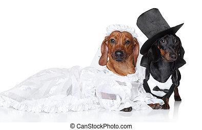 mode, chien basset allemand, mariage