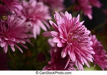 mode., macro, flores, tiroteio, plantas