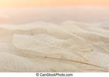 model, achtergrond, droog, hout, blad
