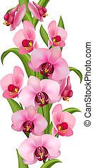 model, gemaakt, seamless, verticaal, orchids