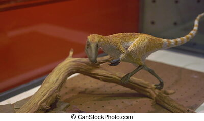 Model of a small dinosaur covered with hairs in museum of...