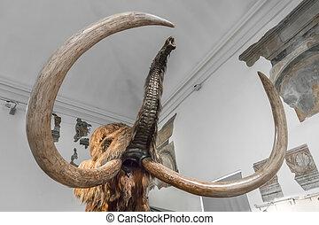 Model of Mammoth