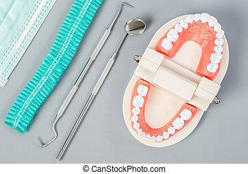 Model tooth with dental tools.