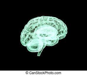 model, van, de, brain.