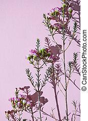 model, van, de, takken, van, lente, rose bloemen, op, een,...