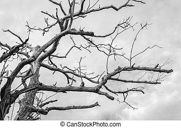 modello, albero, morto