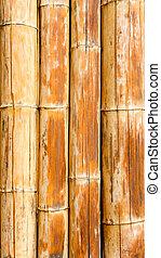 modello, bambù, canna, struttura, fondo