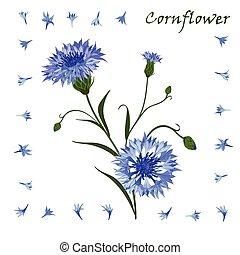 modello, blu, cornflower, hand-drawn, isolato, mazzolino, bello