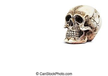 modello, cranio