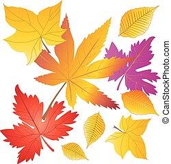 modello, foglie, albero, giallo, arancia, vettore, cadere, acero, rosso