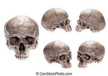 modello, set, cranio