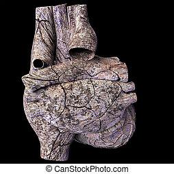 modelo, de, arruinado, corazón humano