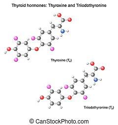 modelo, hormonas, tiroides