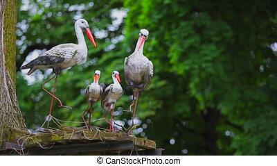 models storks on a background of green trees.