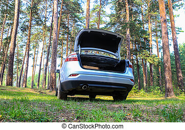 car in the pine wood