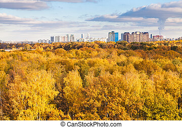 modern city and yellow woods in autumn day