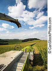 Modern combine harvester unloading green corn into the truck