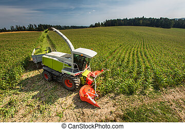 Modern combine harvester unloading green corn into the trucks