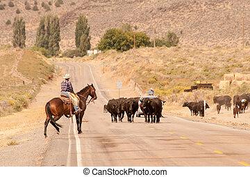 Modern cowboys in Oregon